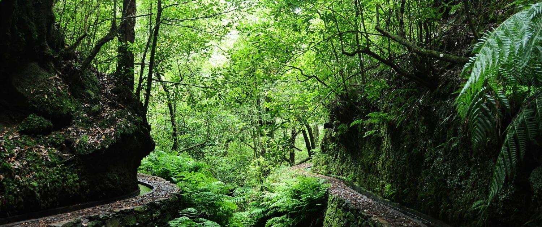 Randonnée du Pico Ruivo sur l'île de Madère