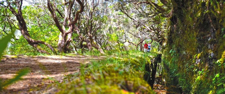 Randonnée dans la Levada Ribeiro Frio sur l'île de Madère
