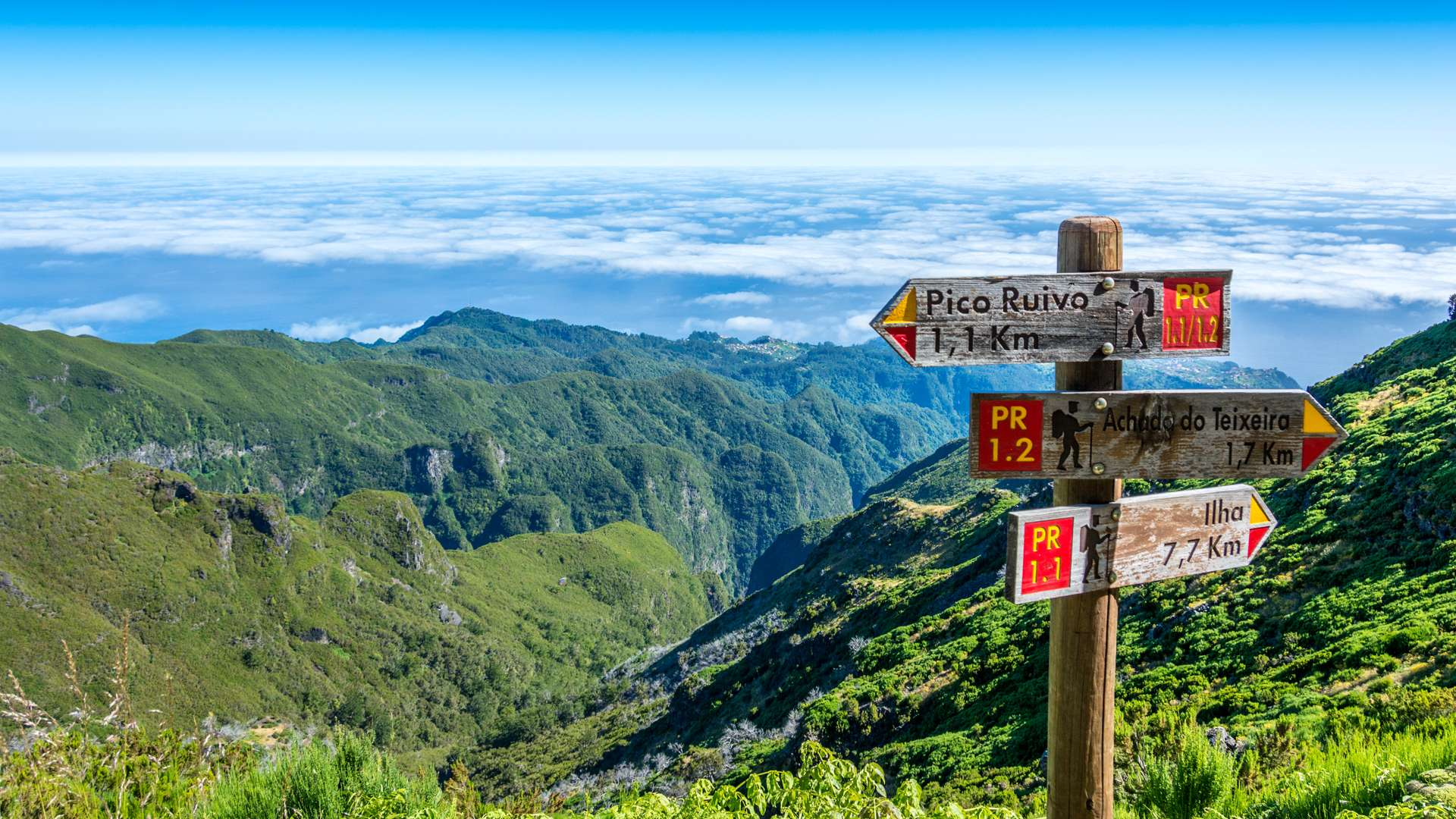 Le Pico Ruivo point culminant de l'île de Madère à 1862 mètres d'altitude au coeur d'une végétation herbacée et arbustive