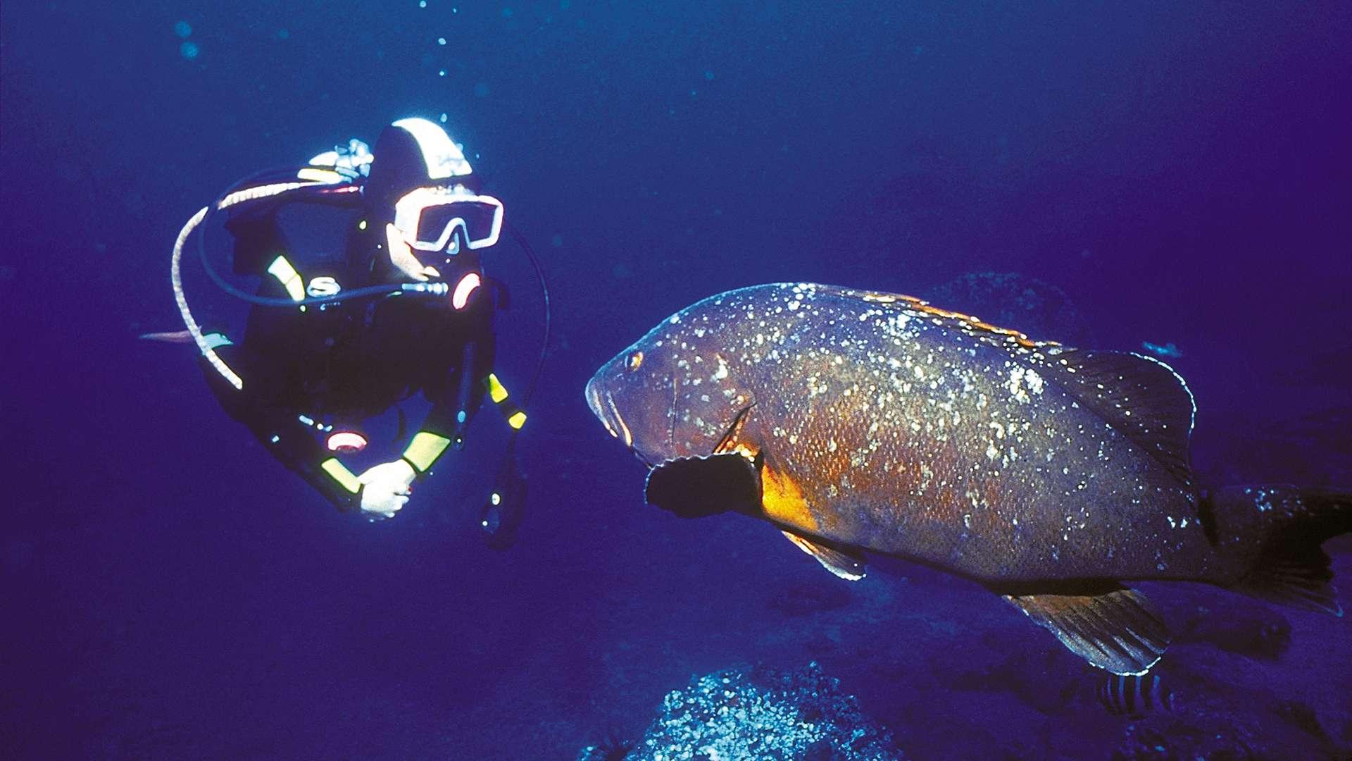 Découvrir la vie sous-marine de Madère et nager avec les dauphins